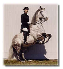 Embajador XI Classic Andalusian Stallion 1988-2000
