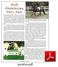 Half Andalusian - Pure Fun